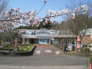 桜IMG_3840